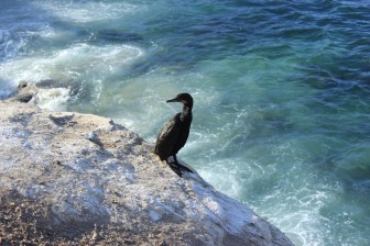 Oiseau marin non identifié