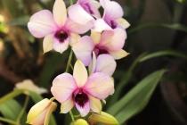 Orchidée -Balboa Park
