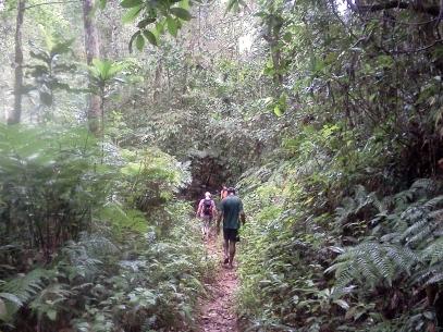 Randonné dans la Jungle