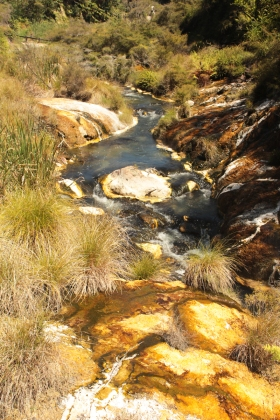 Hot water Creek - Waimangu