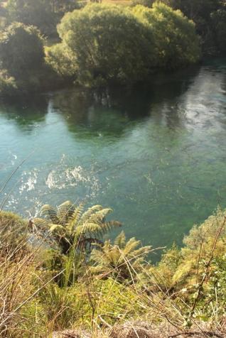 Rivière Waikato