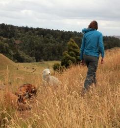 Laura, un agneau et notre ami le cochon