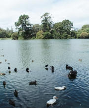 Lac de Whanganui