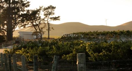 levé de soleil sur le vignoble
