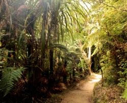 jour 3 : dans la jungle