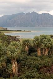 En route pour Wanaka - Lac Hawea