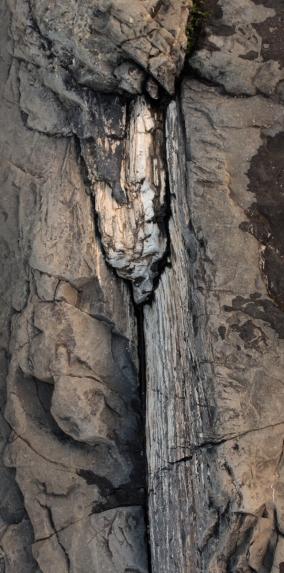 Curio Bay - la forêt petrifié