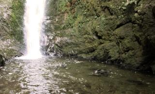 la cascade Ohau, le refuge des bébés phoques