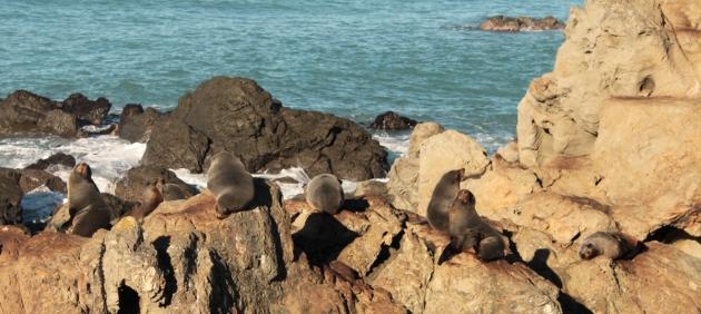 bain de soleil pour les phoques