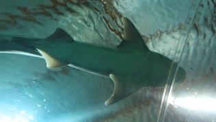 l'aquarium de Napier