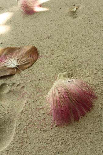 fleurs sur le sable