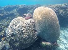 Recifs coraliens