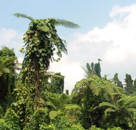 Randonnée dans la jungle - Tour de millenium cave
