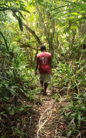 Treck dans la jungle avec mon guide