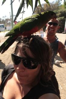 un perroquet roi sur ma tête avec Mahu en arrière plan