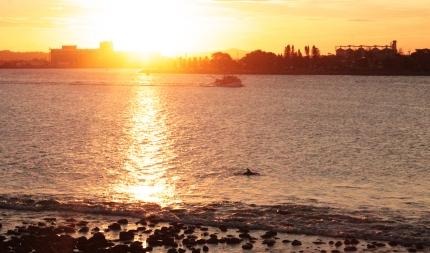 Dauphin et Coucher de soleil - Newcastle