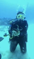 Petite pieuvre très attachante - plongée