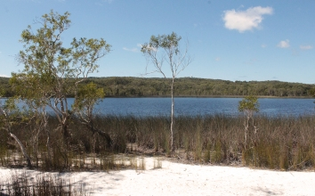 Brown lake - Straddie