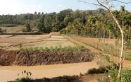 la vue depuis la maison - Payyampalli