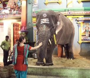 L'éléphant Lakshmi - Arulmigu Manakula Vinayagar Temple