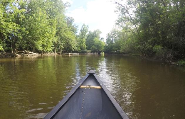 dans le bayou