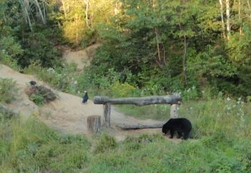 Observation de l'ours