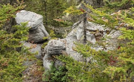 La tortue et le hibou - île Niapiskau
